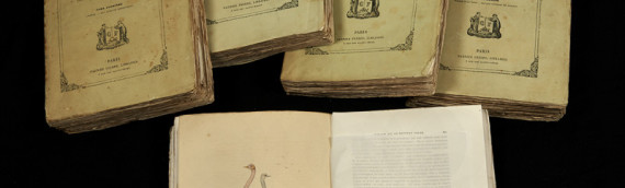 Numérisation – Collection originale de De Buffon